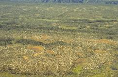 View a larger version of this image (jpg).  (Peat Plateau Bog)