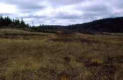 View a larger version of this image (jpg).  (Slope Bog)