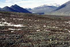 View a larger version of this image (jpg).  (Sparsely vegetated (high arctic))