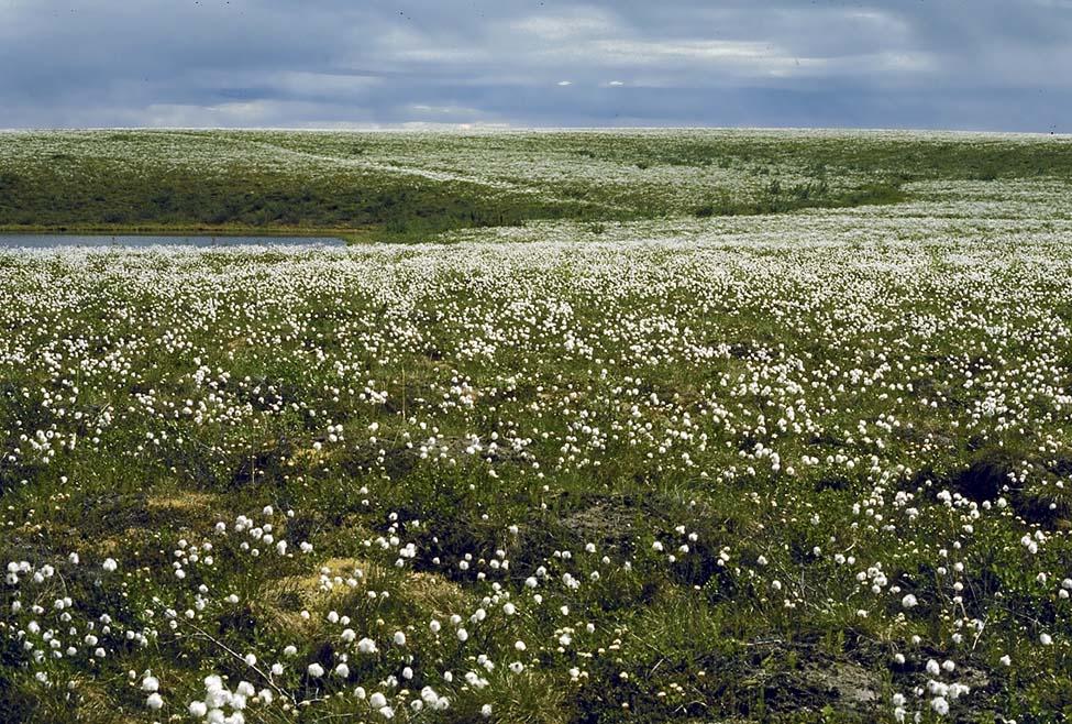 nunavut tundra