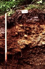 View a larger version of this image (jpg).  (Ferro-Humic Podzol Profile )